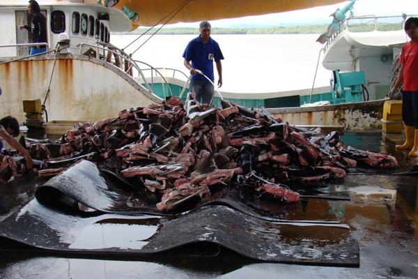 Purple-Notice-shark-finning-1
