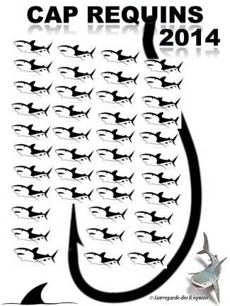 Requins Tigre/Tiger sharks