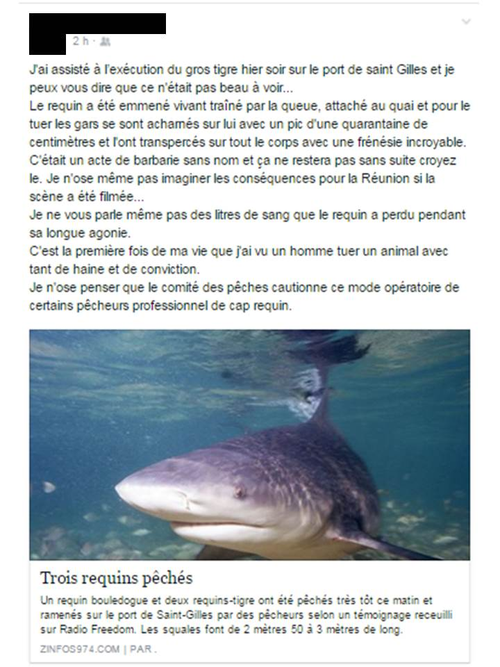 Témoignage de la mise à mort d'un requin Tigre