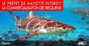 flash_infos_requin1